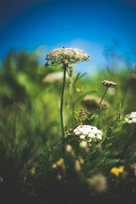 amongst the flora