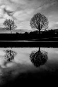 tree-reflect-2