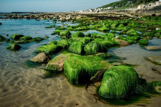 The algae ciovered rocks