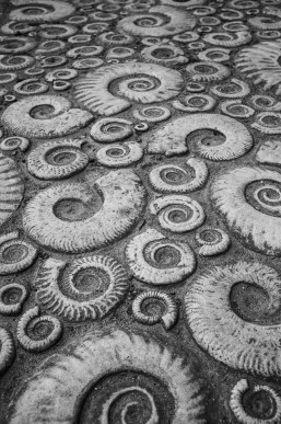 Ammonites on the path by the museum