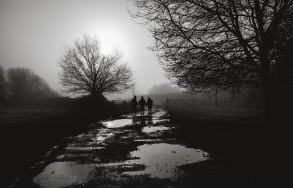 3 walkers